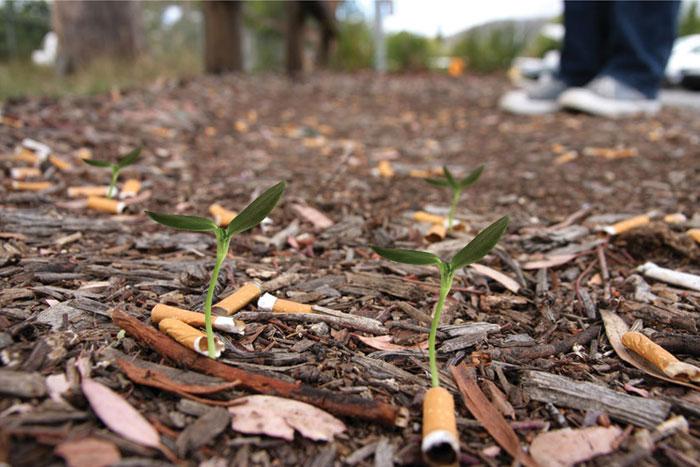 cigarette-seeds
