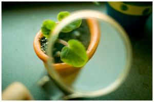 loupe_plant