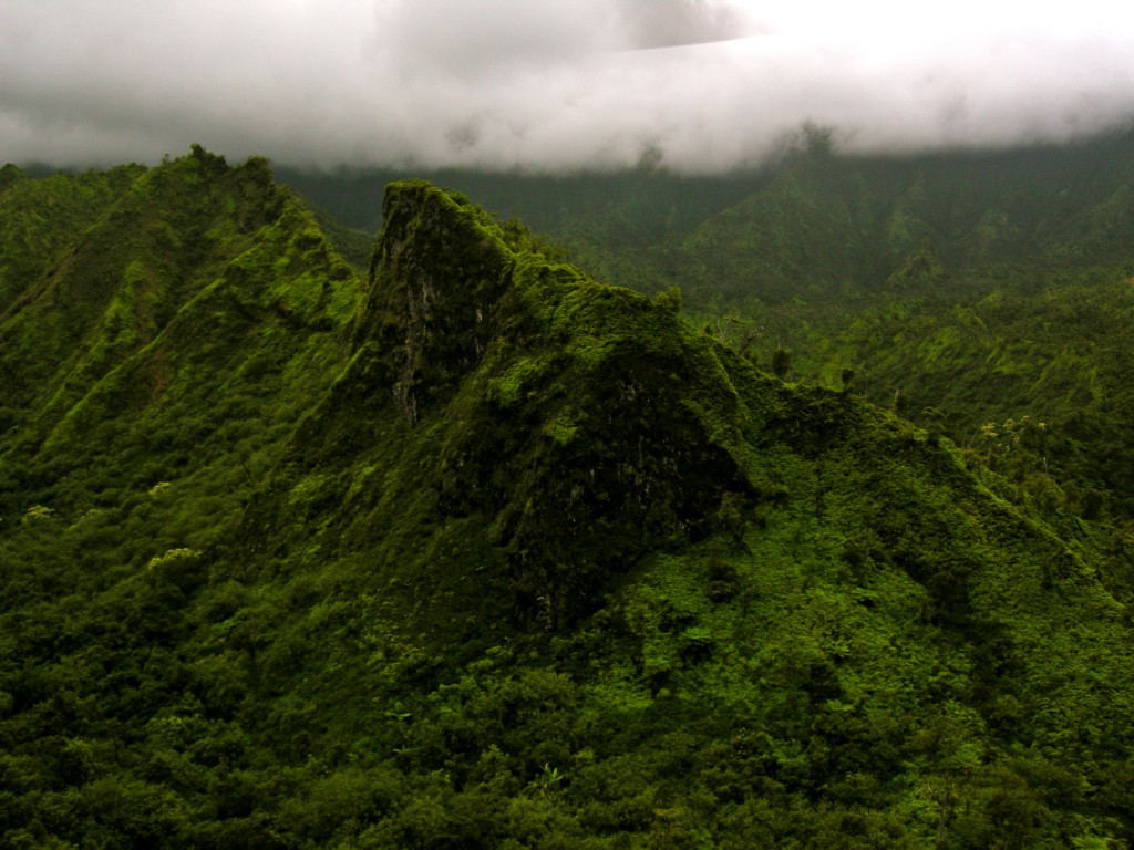 Island Interior & Rainforest