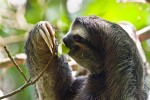 sloth-rainforest